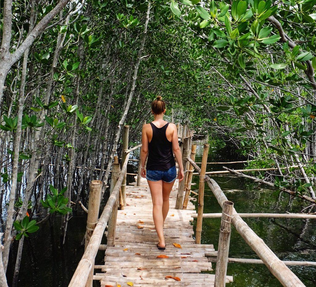 Mangroven Wald auf Bantayan Island