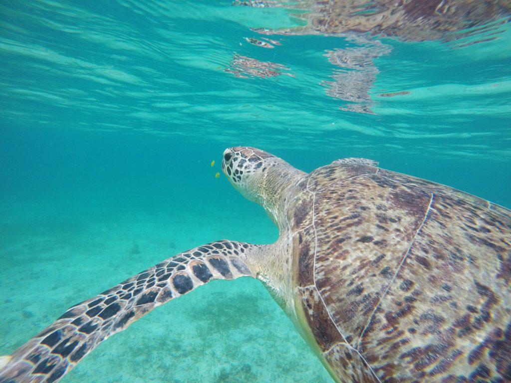Schnorcheln mit Wasserschildkröten