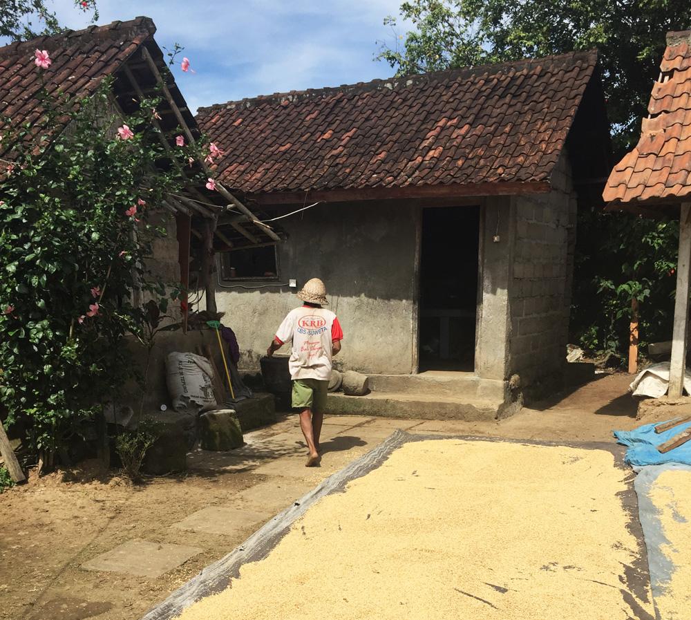 Einblicke in das Leben eines Reisbauers