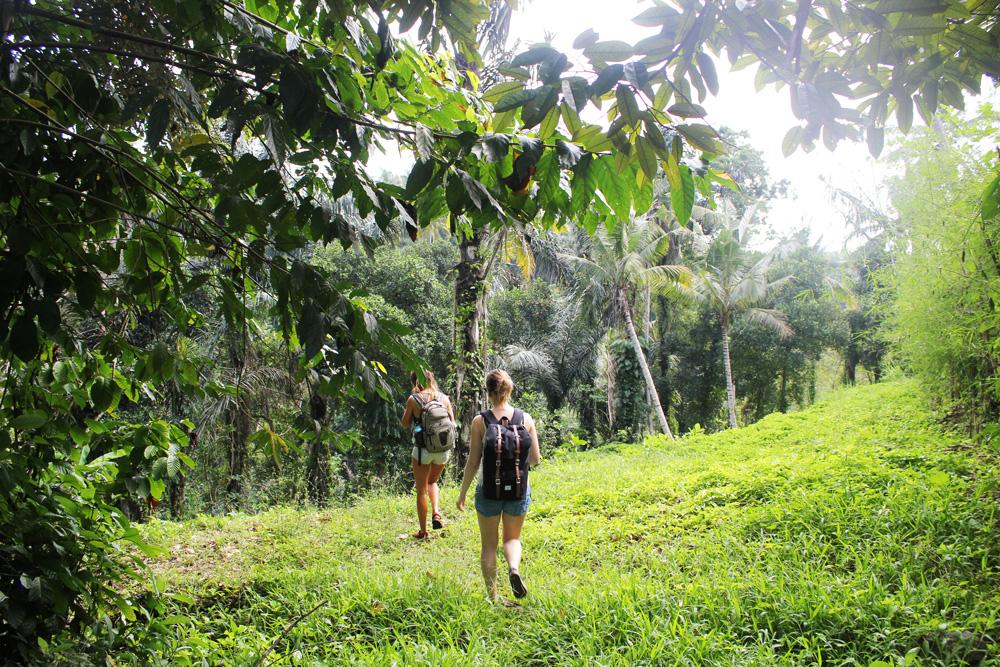Wanderung nach Ubud durch Dschungel und Reisfelder
