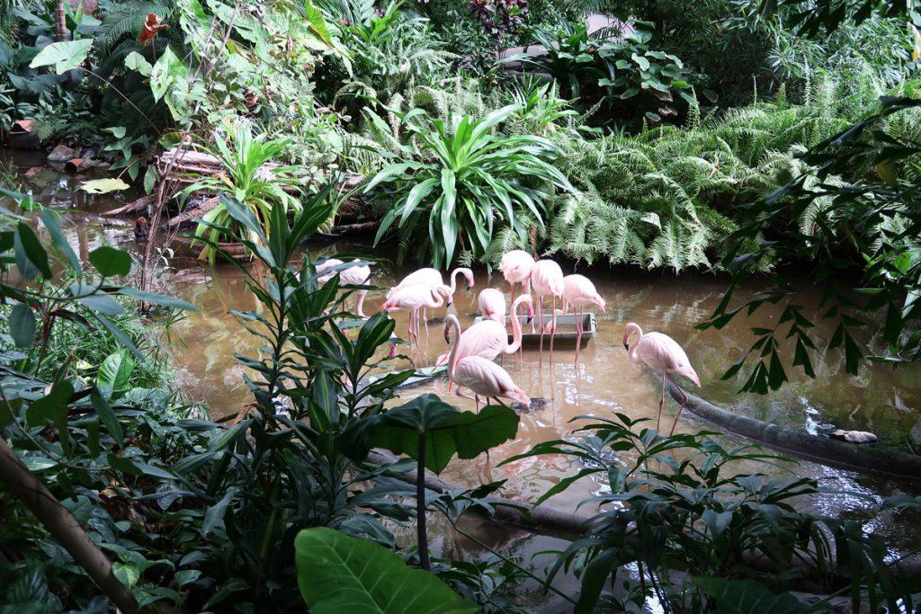 Flamingos im Regenwald